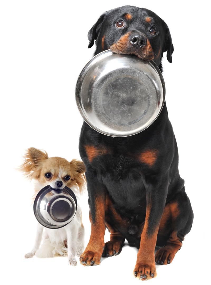 Kvalitetsfôr for hund og katt